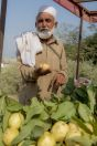 Selling fruits, Mansehra