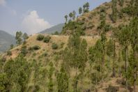 On the way between Mansehra and Kuzabanda
