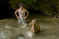 Young man bathing calf, Bagrian