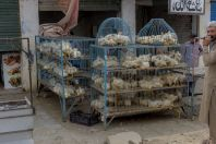 Sale of chickens, Mingora