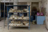 Sale of chickens, Mingora