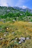 Habitat of Testudo hermanni, Starigrad - Paklenica