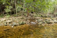 Habitat, Santubong NP