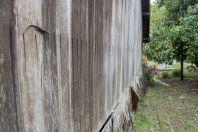 Eutropis rudis, Damai Santubong
