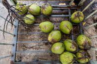 Kokosy, Bau