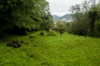 Habitat Rana latastei, Nova Gorica
