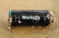 Goose barnacles (Pedunculata), Cirripedia