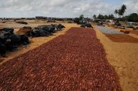 Sušení kalamarů, Negombo