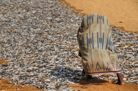 Sušení ryb, Negombo