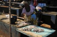 Fish market, Negombo