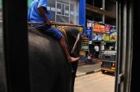 Slon mezi Kolombo a Galle