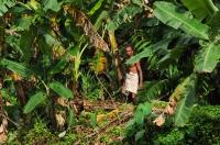 Sběrač banánů