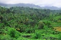 Okolí lesní rezervace Sinharaja