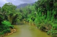 Lesní rezervace Sinharaja