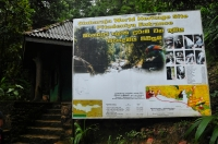 Sinharaja - vstup
