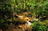 In the rainforest, Sinharaja