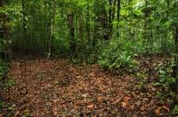 Habitat of Hypnale nepa, Sinharaja