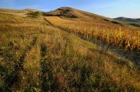 Travnaté stepi střídají kukuřičná pole