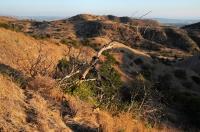 Chino Hills