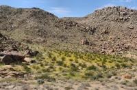 Fortynine Palms Oasis trail, Joshua Tree NP