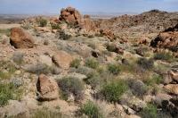 Western Chuckwalla habitat