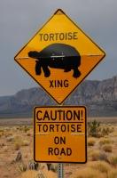 Želvy na cestě, Red Rock Canyon