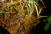 Ryba v Sequoia NP