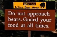Sequoia NP - běžný výskyt medvědů
