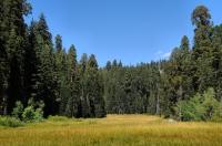 Crescent Meadow, Sequoia NP