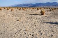 Devils Cornfield, Death Valley NP