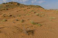 Desert, Novbur