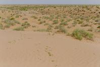 Desert, Uchkizil