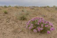 Desert, Qorovulbozor