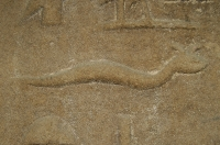 Cerastes cerastes, Philae