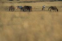 Horses, Gozhdarazhdë