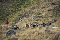 Herd of goats, Erind