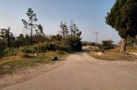 Camp, Ardenica