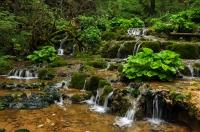 Stream, Apuseni Mts.