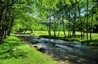 NP Domogled Valea Cernei