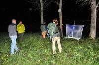 Night hunting, NP Muránská planina