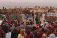 Market with camels, Goulmine