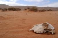 Desert near Goulmine