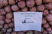 Potatoes, Dushanbe