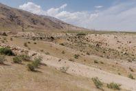 Semi-desert, Sambuli