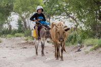 Local cowboy, Teshiktosh