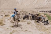 Shepherds, Teshiktosh