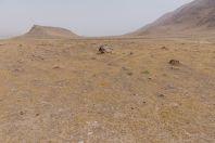 Tajik-Afghan border