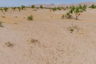 Desert, Teshiktosh