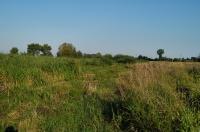Habitat of Zootoca vivipara, Strážné
