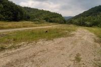 Lokalita Coronella austriaca a Vipera berus, Svetlice